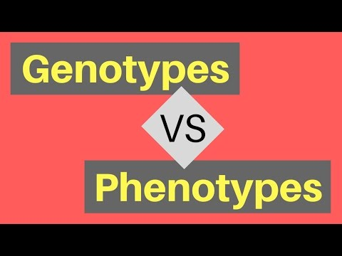 genotype-vs-phenotype-|-understanding-alleles