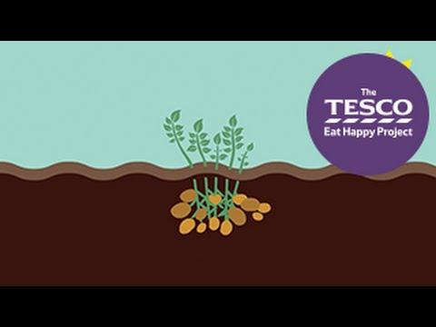 Earthy Potatoes: how do potatoes grow?
