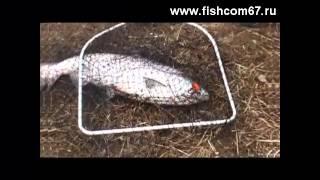 Рыбалка на Камчатке - чавыча(http://fishcom67.ru В этом видео ролике вы увидите шикарную рыбалку на Камчатке., 2013-04-01T18:19:06.000Z)