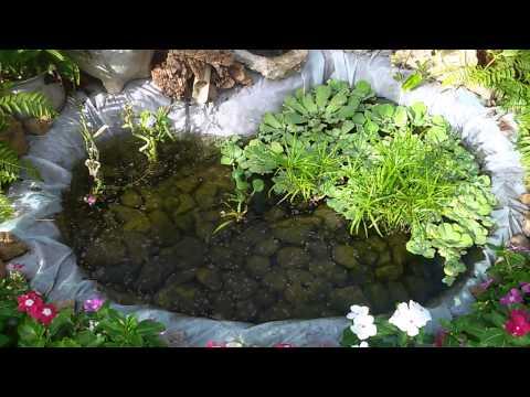 Estanque casero natural con peces guppys youtube - Estanques para peces ...