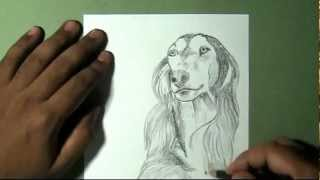 How to draw afghan hound breed dog