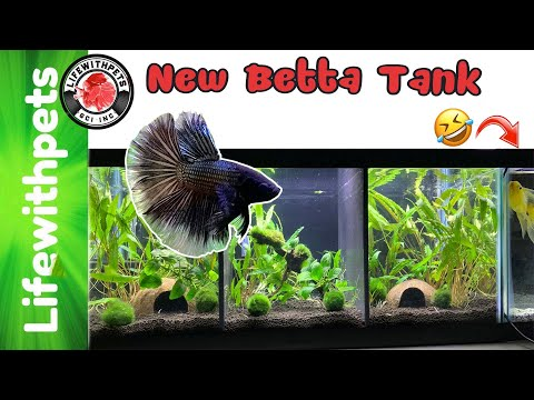 Easy Planted Divided Betta Fish Tank ( Step By Step)
