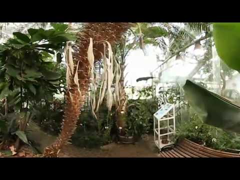 360VR in Edvard Anderson's Green House, Stockholm