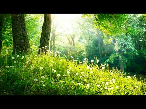 Healing Meditation Music, Relaxing Music, Calming Music, Stress Relief Music, Peaceful Music, ☯3243