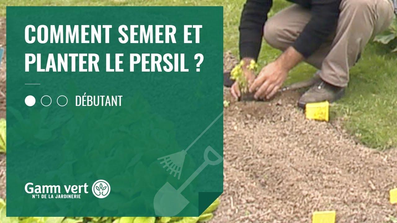 Comment Planter Les Graines De Persil [tuto] comment semer et planter le persil ? – jardinerie gamm vert