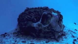 Flesh-Eating Dermestid Beetle Time-Lapse | California Academy of Sciences