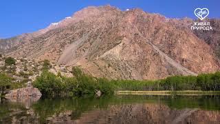 Озеро Змеиное Телеканал Живая природа