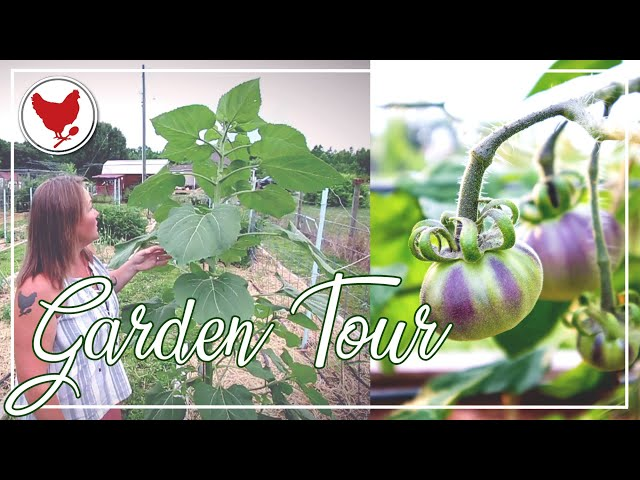 GARDEN TOUR - Week 4   A Good Life Farm