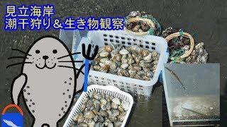 木更津の見立海岸で潮干狩り。 施設の様子も。 アナゴの稚魚?、スナモ...