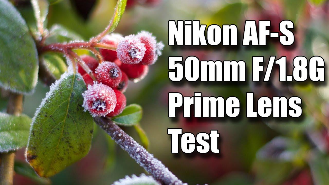 Nikon Af S Dx Nikkor Mm F  G Lens Dog