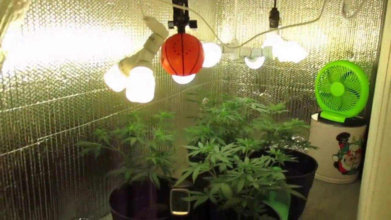 Diy Cfl Cannabis Grow Room 1 Youtube