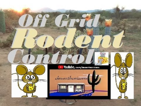 Off Grid Rodent 'control' @ AZ Off-Grid (Unplugged) Ranch