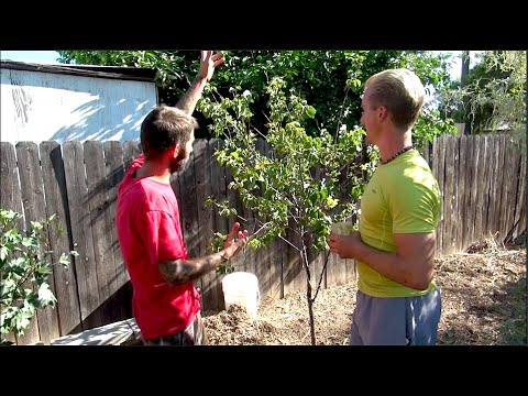 How to Heal a Sick Fruit Tree