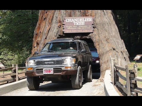 Chandelier Tree and the Redwood Forest! Pacific Coast Highway Road ...