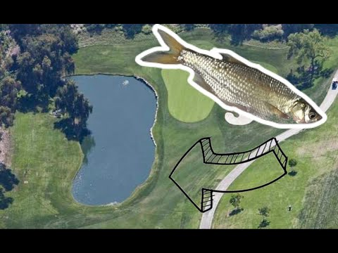 Fishing GOLF COURSE Pond With LIVE SHINERS *BIG BASS*