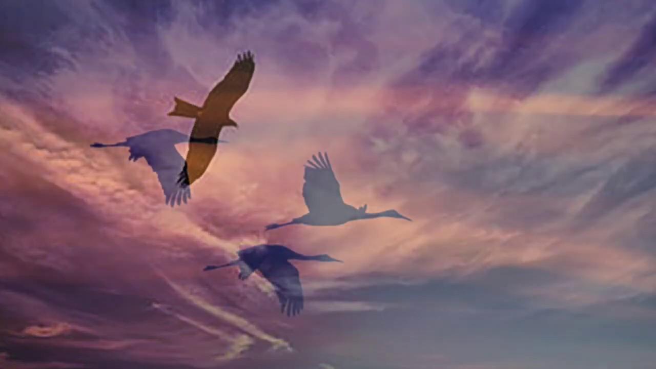 To A Skylark by Percy Bysshe Shelley: Video Poem