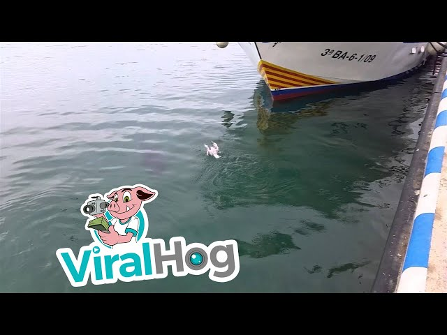 Tuna VS. Seagull