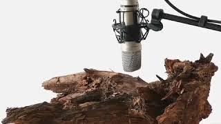 Holzwurm Lärm