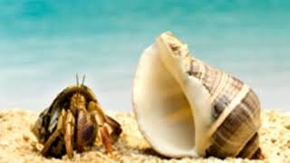 What Do Hermit Crabs Eat They're Not Shy When it Comes to Food