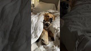 Kitty and Doggo Comfortably Snuggle || ViralHog