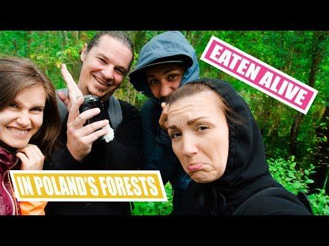 POLAND   Vlog 108 - Why Swamps Aren't Good For You   KAMPINOSKI NATIONAL PARK   WARSAW