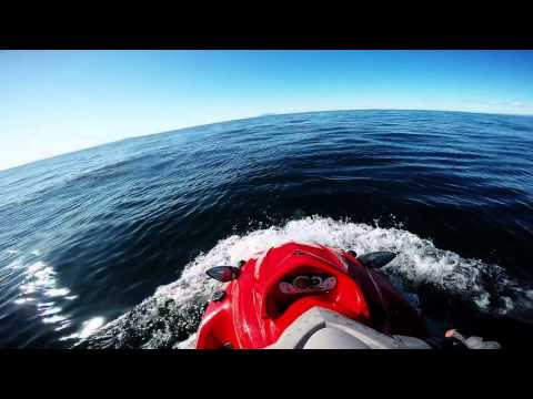 RBC - Hauraki Gulf Harbour Dolphins