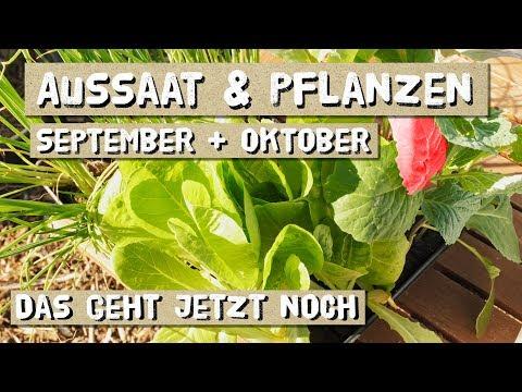 Aussaat Im September Und Oktober - Säen Und Pflanzen Im Freiland Und Folientunnel