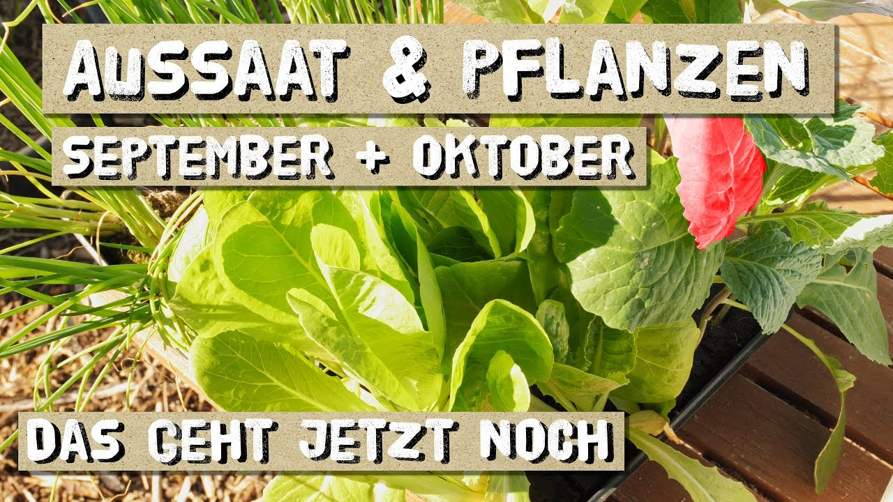 aussaat im september und oktober s en und pflanzen im freiland und folientunnel youtube