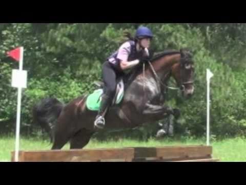 Morgan Horse For Sale, Dressage, Hunter, Eventing