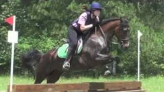 Morgan Horse For Sale, Dressage, Hunter, Eventing Thumbnail