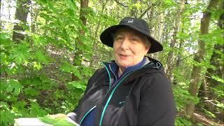 Wycieczka z botanikiem, drzewa cz. 1