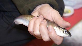 Рыбалка.Ловля рипуса на увильдах