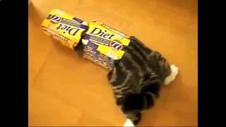 Кошки видео приколы! Смешные кошки для детей!