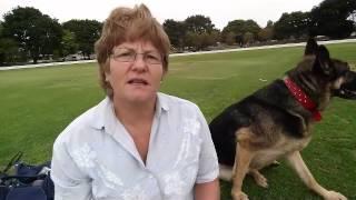 Black German Shepherd Puppies - They're Like A Little Bear