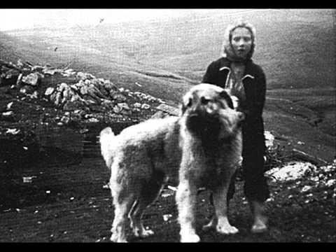 Macedonian Folklore - Zaljubiv male tri momi (Ensemble Niko Pusoski)