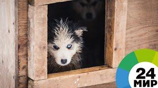 В Армении бездомных собак пристраивают в новые семьи - МИР 24