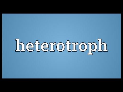 Heterotroph Meaning