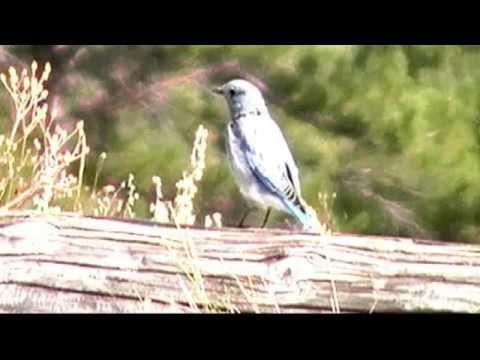 U.S. Fish & Wildlife Service - Migratory Bird Treaty Act - RangeTracker