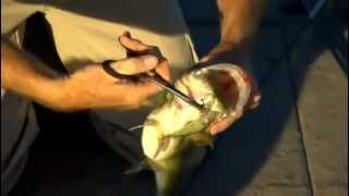 Wade Middleton on fishing jerkbaits for largemouth bass