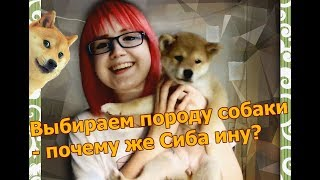 Выбираем породу собаки - почему же Сиба ину?