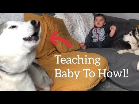 Husky & Dad Teach Baby How To Howl! [TRY NOT TO SMILE!!]