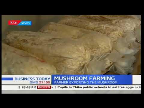 Farmers exporting Mushroom