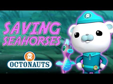 Octonauts - Saving Seahorses | Cartoons for Kids | Underwater Sea Education