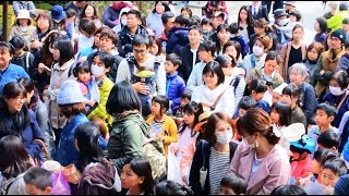 名古屋伝統文化「お菓子撒き」in 愛知県江南市 2018/4/8