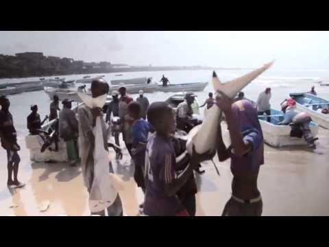 Somalia is Open for Business -- The Fishmonger