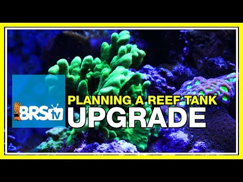 Week 52: Planning A Reef Tank Upgrade, Plus A Look Back At The BRS160 | 52 Weeks Of Reefing