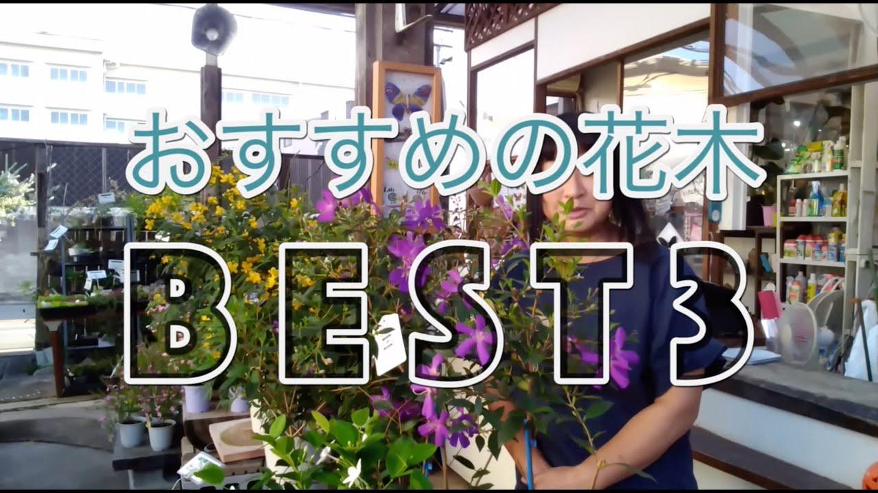 おすすめ花木ベスト3 ノボタン・コートダジュール レウコフィラム カッシア