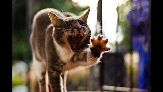 ПРИКОЛЫ С КОТАМИ И СОБАКАМИ 2021 Приколы со смешными животными Смешные котики Подборка 6