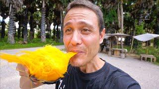 How to Eat Palmyra Palm Fruit  Amazing PALM SUGAR Superfood!