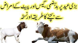 Eid al Adha par ab pait ke masle khatam easy solutions